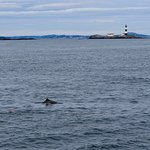 Some of the porpoises