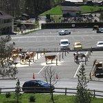 Для коров парковка бесплатная