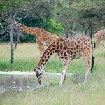 African Adventure Travellers照片
