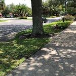 Wide, shaded sidewalks make for easy walking