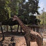 ภาพถ่ายของ สวนสัตว์เชียงใหม่