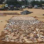 Fish salt drying in the sun