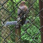 Foto de Carolina Raptor Center