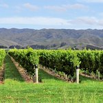 Beautiful Marlborough in March before harvest taken on one of our Marlborough wine tours
