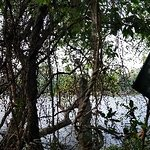 Bird sanctuary kumarakom