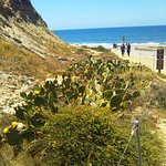 Photo of Torrey Pines State Natural Reserve
