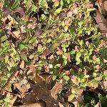 Flowers of blueberry (Genus vaccinium) will be June & July berries