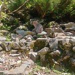Photo of Snow Monkey Resorts Tours