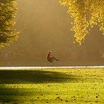 A tightrope walker in Hagley Park near sunset