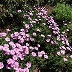 Фотография Ness Botanic Gardens