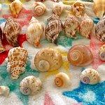 Treasure Seekers Shell Tours Photo