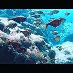 Фотография Grotto Snorkeling Sightseeing Day Tours - Sea Lovers