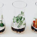 Taller Crea tu propio Terrarium en Greenworks Madrid