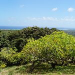 Glimpse of the east coast from the cashew nut orchard.