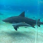Sea World Resort Photo
