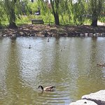 Bild från Donald M. Gordon Chinguacousy Park