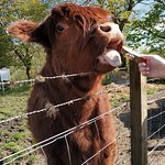 Photo de The Hairy Coo - Free Scottish Highlands Tour