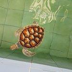 ภาพถ่ายของ ศูนย์อนุรักษ์พันธุ์เต่าทะเล กองทัพเรือ