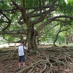 great tree roots
