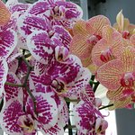 My fav ~ the beautiful, multiple varieties of orchids.