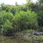 Photo de Juniper Springs Recreation Area