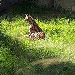 Photo of Zoa Parc Animalier et Botanique