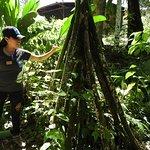 Foto de Centro de Rescate Amazonico