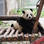Photo of Chongqing Zoo (Chongqing Dongwuyuan)