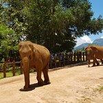 elephants wandering along the road