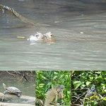 Cano Negro Wildlife Refuge resmi