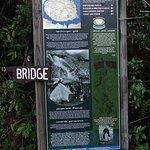 Buller Gorge Swingbridge Ltd의 사진