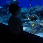 Foto de Aquarium Costa De Almería