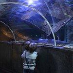 tunnel des requins