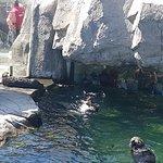 Photo de Vancouver Aquarium