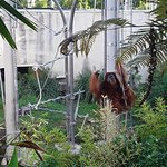 My favourite...orangutans. amazing animals...so worth the visit to see this guy. Many more anima