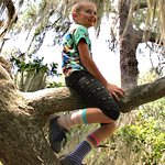Great trees for kids who like to climb low trees