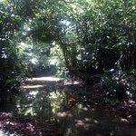 Φωτογραφία: Cockscomb Basin Wildlife Preserve