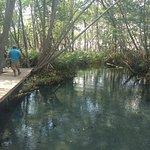 Ria Celestun Biosphere Reserve照片