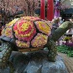 Prettiest tortoise I've ever seen.