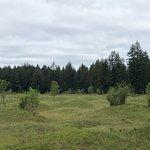 Mima Mounds Natural Area Preserve Φωτογραφία
