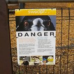 Warning about Magpies