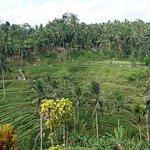 ภาพถ่ายของ Tegalalang Rice Terrace