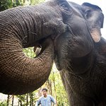 Up close and personal with an elephant