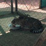 صورة فوتوغرافية لـ Cheetah Conservation Fund