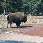 Photo de Bearizona Wildlife Park