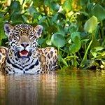 Photo of Manu Wildlife Peru