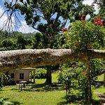 JungleQui Zip Line Park照片