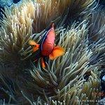 悦活越南-户外活动与潜水中心照片