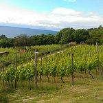 Wine tasting Tour in Castellabate:Vineyards