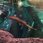 Ripley's Aquarium of the Smokies Φωτογραφία